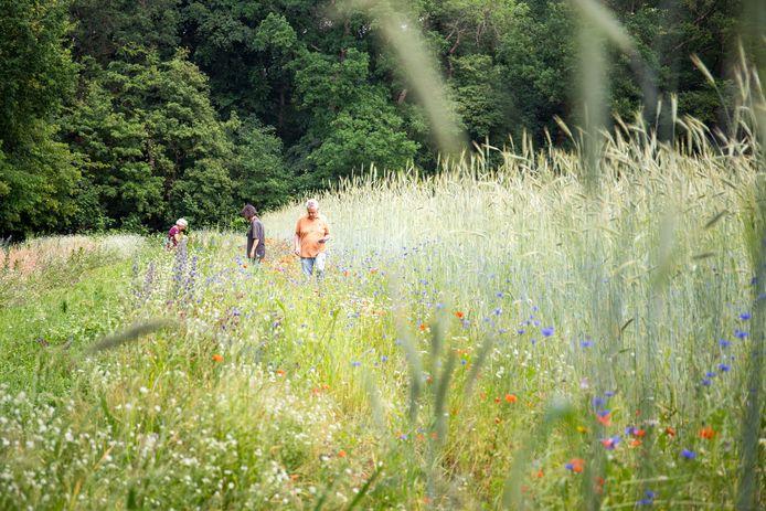 Bewoners uit Wageningen kijken rond op de akker van Graangeluk.