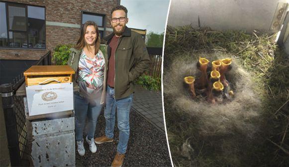 Het nest met meesjes sinds enkele weken in de brievenbus van dit Limburgse koppel.