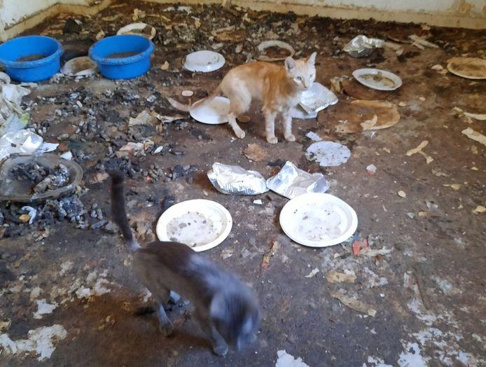 De kamer waar katten in hun eigen vuil leefden werd door inspecteurs omschreven als een horrorkamer.