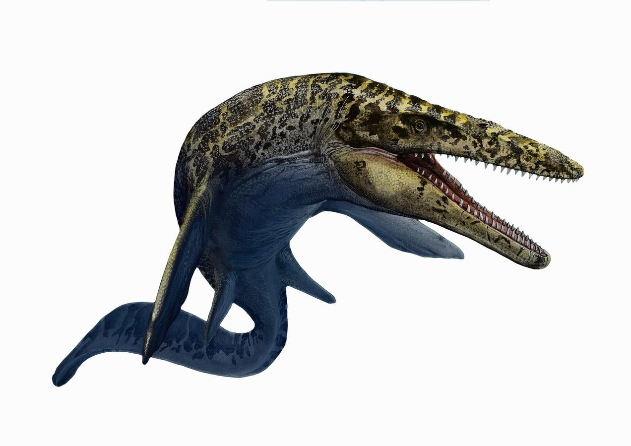 Impressie van een mosasaurus.