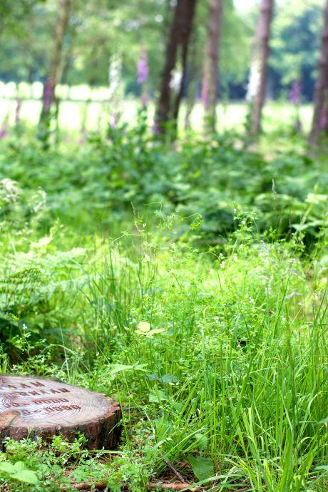 Krijgt Ophemert een natuurbegraafplaats? Er is kans op