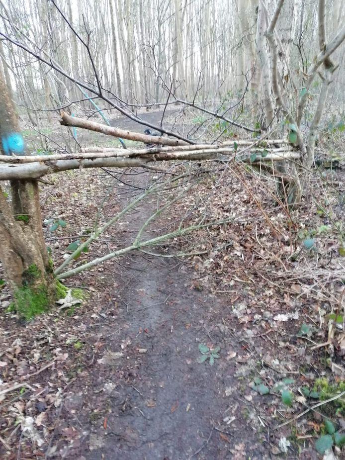Dikke takken op keelhoogte over een door mountainbikers gebruikt pad in het bos van de Liniedijk.