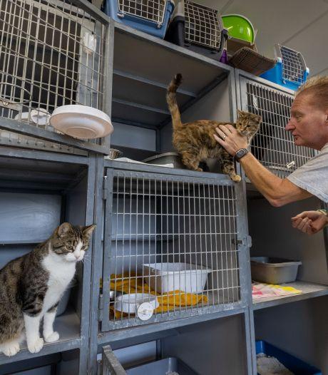 Deze dierenambulance gaat strijd aan met kattenoverlast: 'Ware plaag op platteland'
