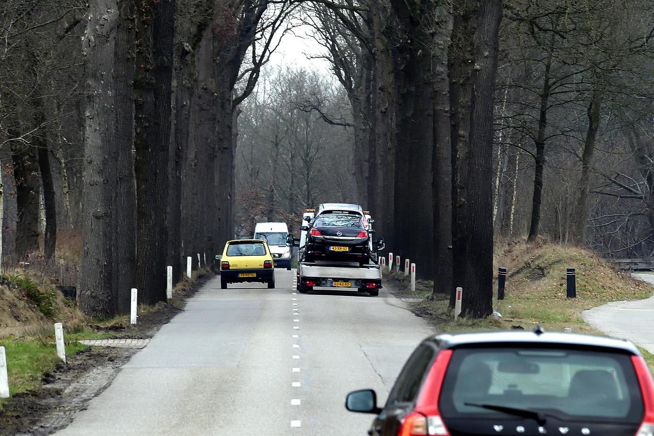 Bomen langs de N638 in Zundert moeten sneuvelen om de weg breder en veiliger te maken.