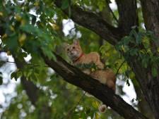 Angstige kat in boom geeft brandweer het nakijken in Breda