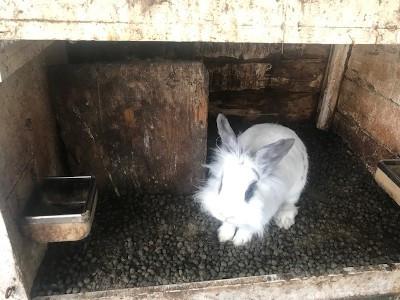 Een van de in beslag genomen konijnen in zijn vervuilde hok.