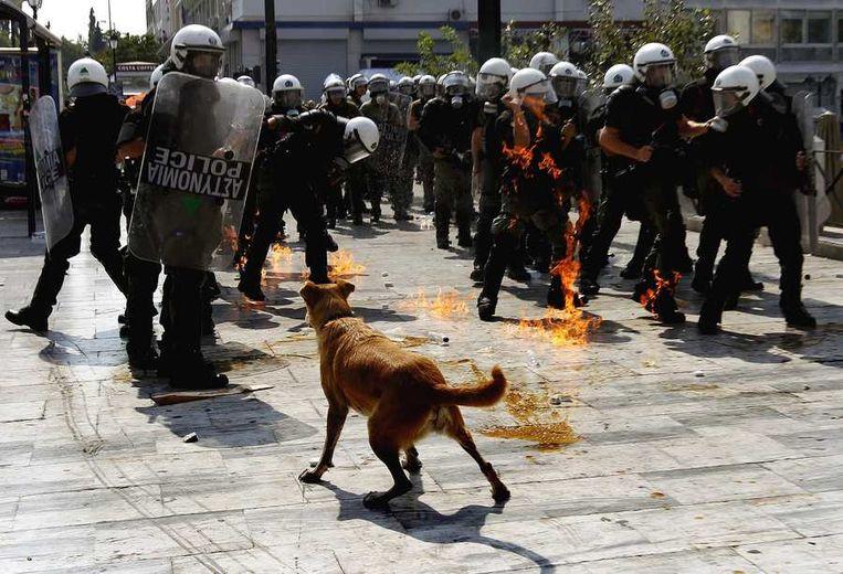 Bang is Loukanikos - hier wederom op 5 oktober 2011 - in elk geval niet. © Reuters Beeld