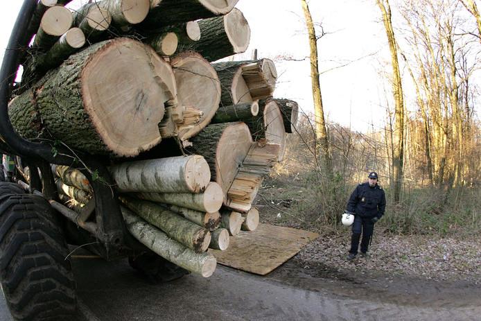Bomenkap, foto ter illustratie