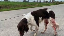 """Hond met schotwonde aangetroffen nabij Franse grens: """"Vermoedelijk weggejaagd door jagers"""""""