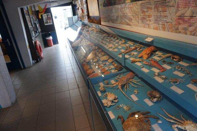 Krabben en kreeften liggen uitgestald in een glazen bak.