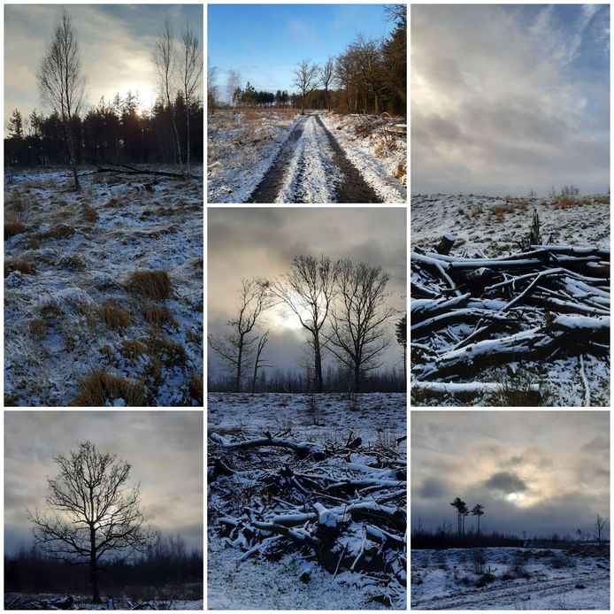 Deze foto's zijn gemaakt op de Strabrechtse Heide in Heeze.