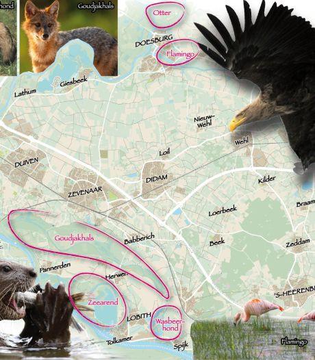 Op safari in de Liemers: wild spotten populair in coronatijd