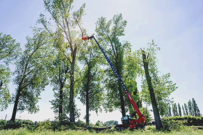 De bomen aan de Distelakkerstraat worden gerooid.
