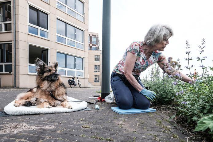 Greet Faber uit Doesburg aan het werk. Hond Masja houdt haar gezelschap.