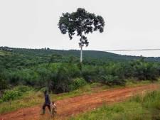 Le Gabon récompensé pour ses efforts contre la déforestation