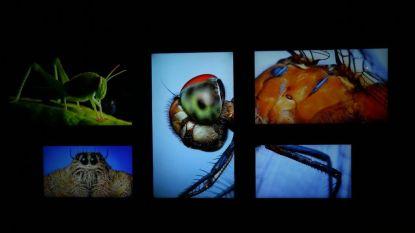 Expo 'Insectogram' nieuwe toerismetroef voor Zutendaal