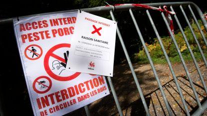 Frankrijk wil besmette varkens in België houden met 60 km lange afsluiting