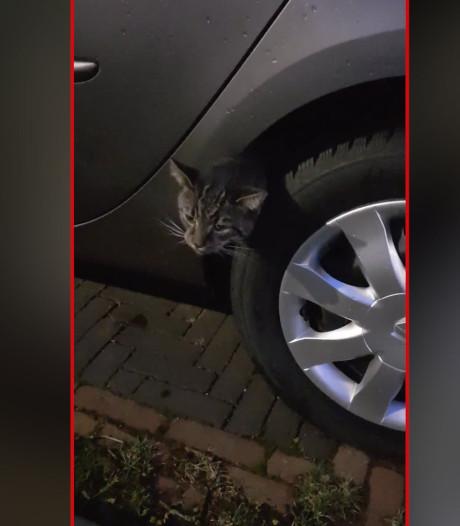 Brandweer bevrijdt 'dronken' kat uit spatbord in Rijssen