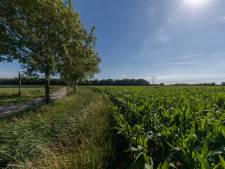 Bedrijvigheid in Auvergnepolder 'zonder dat het hart van het gebied wordt aangetast'
