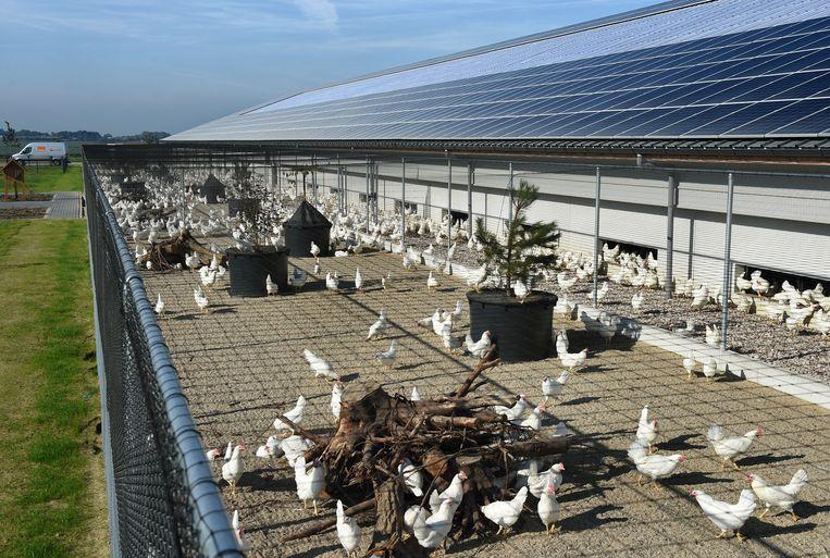 Kipster, naar eigen zeggen 'de meest dier- en milieuvriendelijke kippenboerderij ter wereld'. Beeld Hollandse Hoogte / Marcel van den Bergh