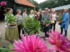 Dahlia's trekken veel bekijks op tuinbrocantedagen in Wolfheze