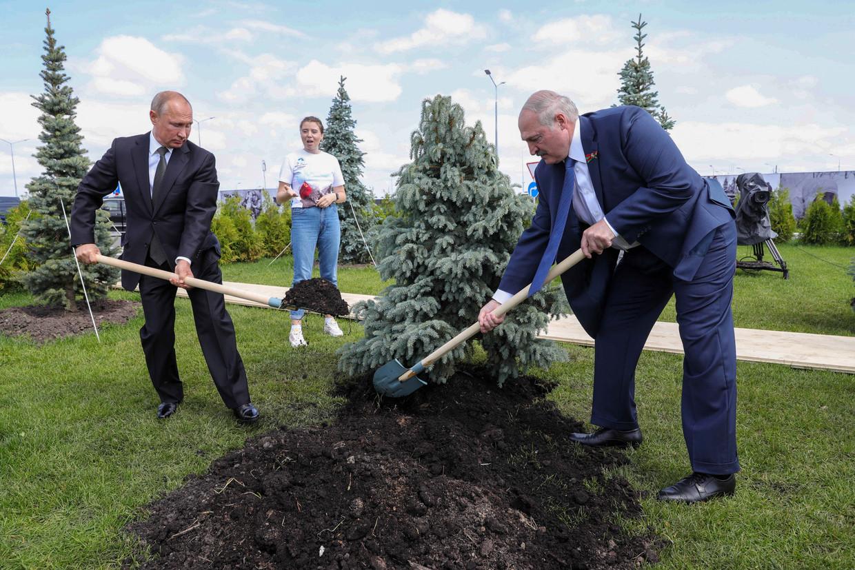 De Russische president Vladimir Poetin en de Belarussische president Aleksandr Loekasjenko planten een blauwspar bij een oorlogsmonument  nabij Moskou, juni dit jaar.  Beeld Mikhail Klimentyev / TASS / Getty