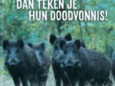 Toeristen op Veluwe krijgen opnieuw waarschuwing: voer geen wilde zwijnen