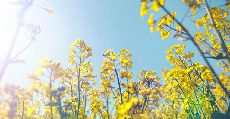 Pinksteren, zon Beeld Fotografie: Getty Images