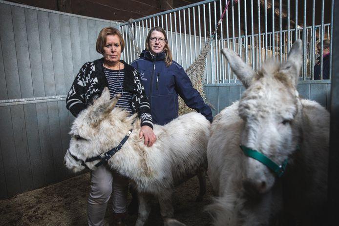 Kristel Cromheeke van vzw Anegria en Marina Tondeleir van paardenasiel Old Horses Lodge in Laarne hebben zich ontfermd over de verwaarloosde ezels.