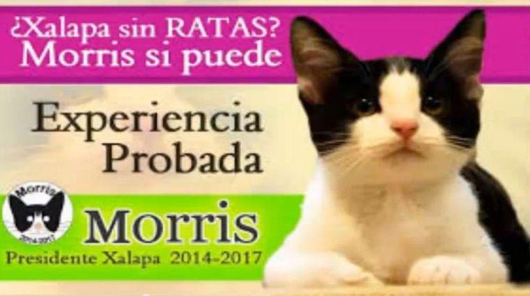 'Xalapa zonder ratten? Morris kan het. Bewezen werkervaring.' Beeld YouTube