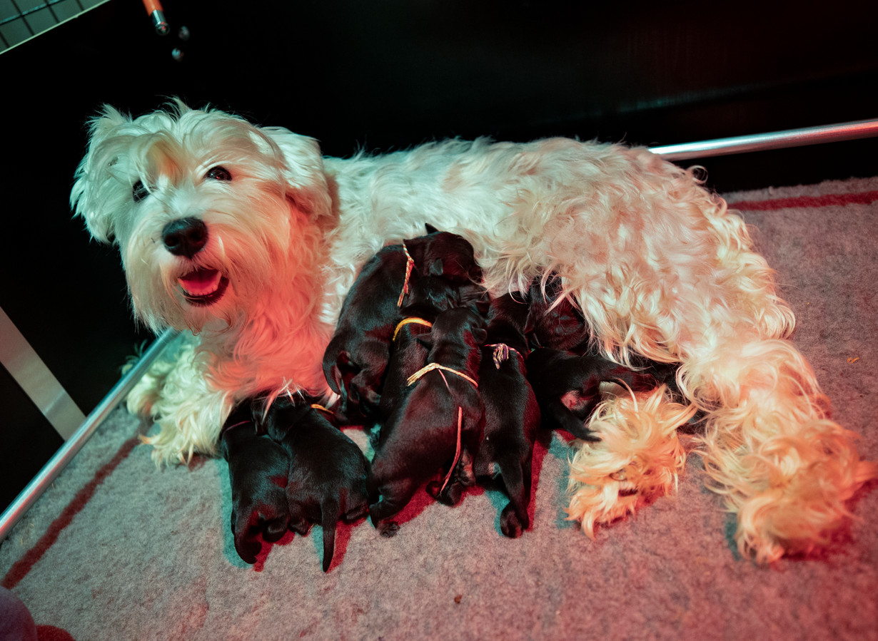 De adoptiemoeder en haar negen weespuppy's