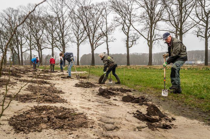 Ger Jansens (vooraan) en andere leden van Natuurwerkgroep Stratum planten bomen in Geldrop.