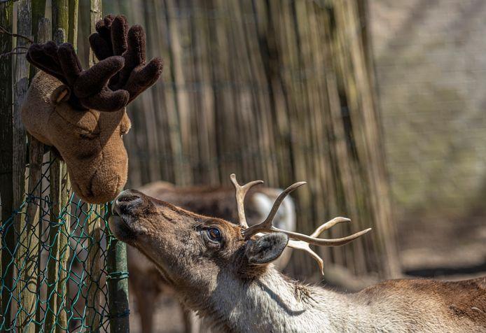 Rendier kust knuffel. Onderdeel van de tentoonstelling 'Dierbaar Dubbelzinnig' van Burgers Zoo uit Arnhem en de WUR.