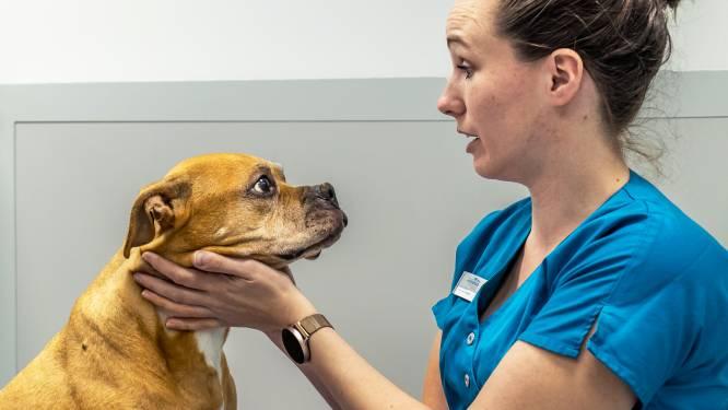 Dierenarts Vivian ziet het niet alleen op dierendag: huisdierbezitters vaker bereid geld uit te geven
