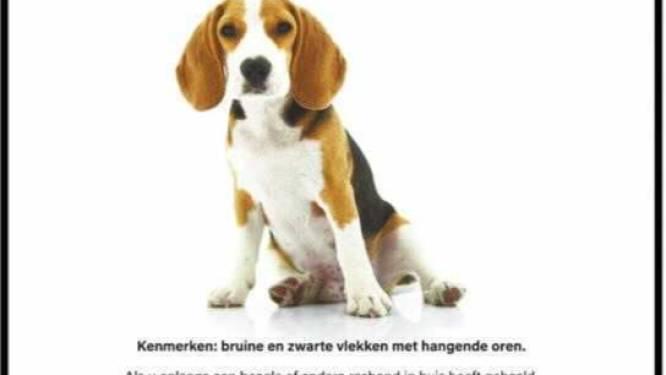 """GAIA vraagt met opmerkelijke campagne aandacht voor dierproeven met honden: """"Elk jaar nog meer dan 1.000 proeven op honden in België"""""""