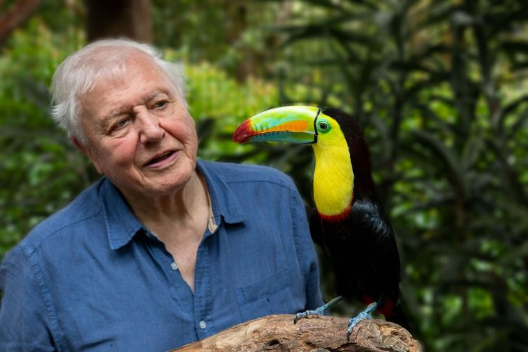 Documentairemaker David Attenborough. Beeld BBC/Humble Bee Films/SeaLight Pictures/Gavin Thurston