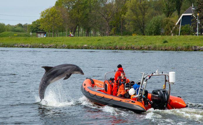 Een koppel uit Lopikerkapel hielp dolfijn Zafar uit de Amsterdamse haven te bevrijden.