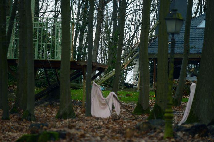 In Holsbeek viel een boom op een huis.