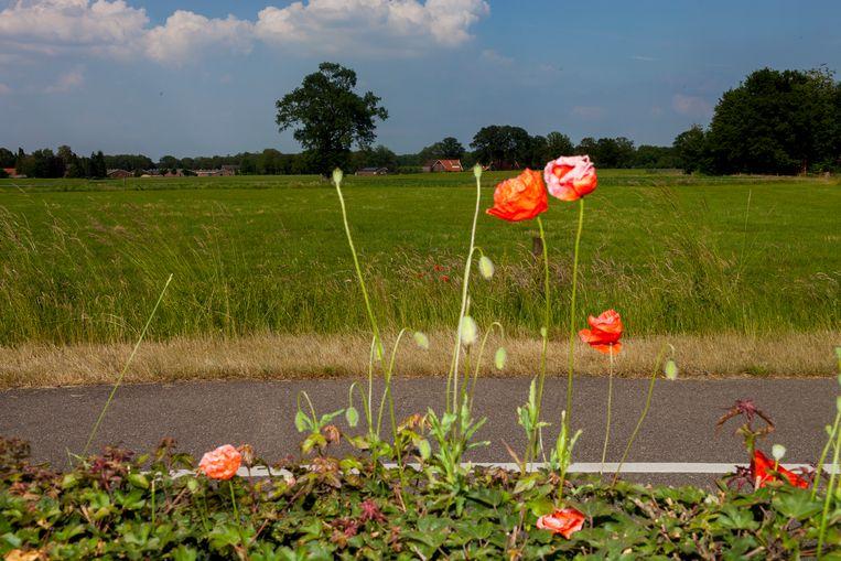 De omgeving van de Jachthuisweg, waar Gerrit Komrij van de ene op de andere dag wist wat poëzie betekende. Beeld Renate Beense