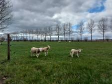 Wandelen in het vogelparadijs in nieuwe natuur tussen Wageningen en Bennekom