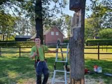Harm (19) maakt ook nog specht en vos in boomstam Riethoven