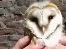 Vrijwilligers zorgen voor huisvesting uilen in Moerdijk