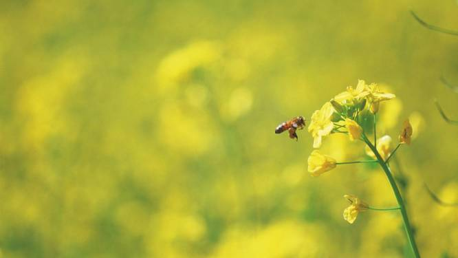 """Wetenschappers waarschuwen voor """"ecologisch Armageddon"""": driekwart insecten verdwenen"""