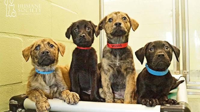 Asiel levert schattige huisdieren aan bedrijven tegen de stress