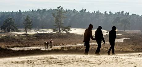 Wandelexcursie in duinen: '75 jaar vrede, maar de bomkraters zijn nog altijd te zien'