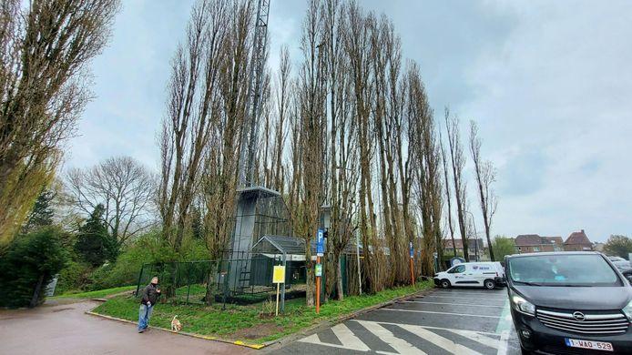 Ook de populieren op de Rietput in Bissegem moeten weg.