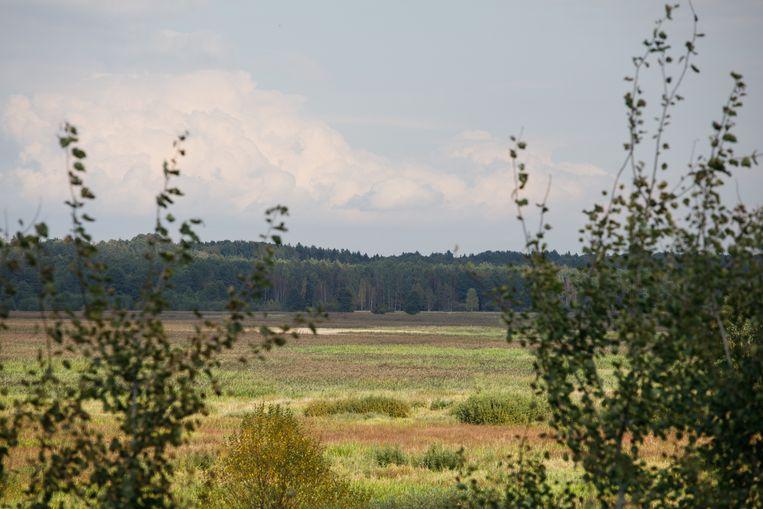 Zicht op de grens met Belarus, vlakbij Babia Góra en Siemianówka in het noordoosten van Polen. Door de noodtoestand is het verboden gebied. Beeld Piotr Malecki