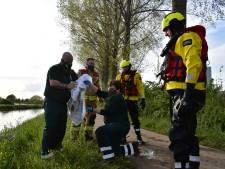 Brandweer redt zwaargewonde zwaan uit rivier bij Bemmel