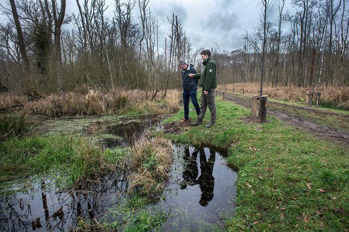 Boswachter Floris Hoefakker (rechts) en projectleider Alfons Keizer in het Ulvenhoutse bos waar wordt gewerkt aan het in stand houden van het unieke 'beekbegeleidend' karakter van het bos.