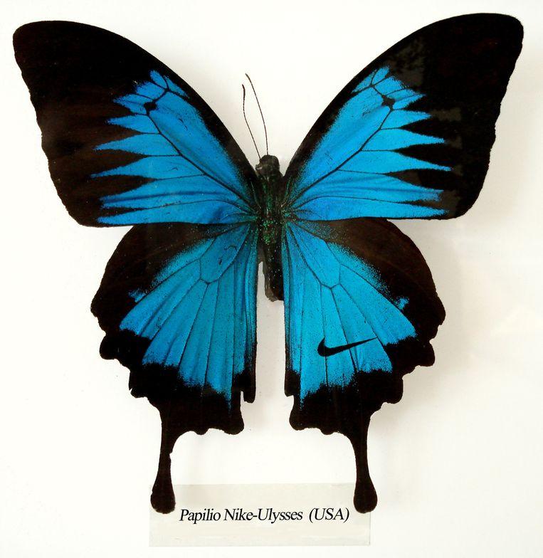 De Papilio Nike Ulysses, een fictieve vlinder met aangeboren Nike-symbool, van Next Nature Network. Beeld null
